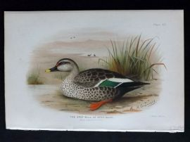 Baker & Gronvold Indian Ducks 1908 Antique Bird Print. Spot Bill or Grey Duck